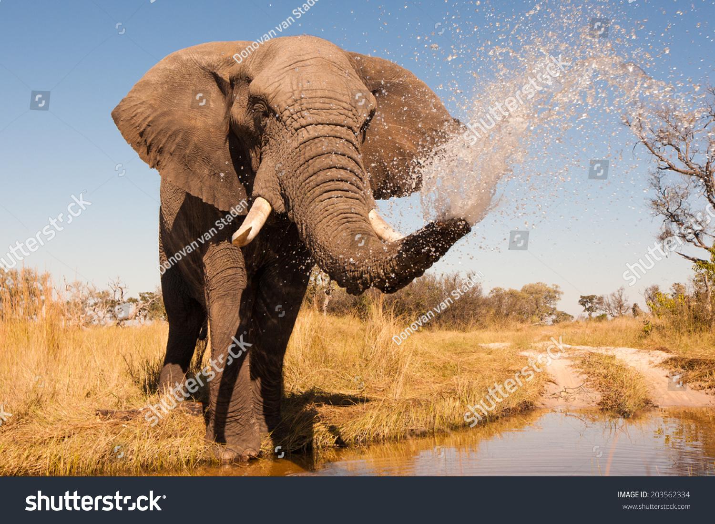 Elephant spraying water - photo#17