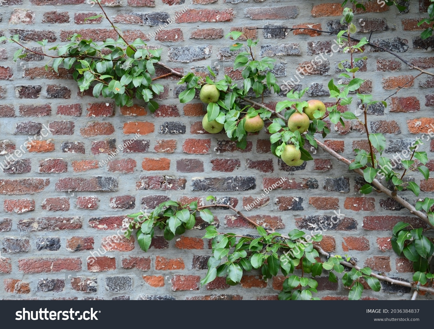 stock-photo-an-apple-tree-growth-in-fron