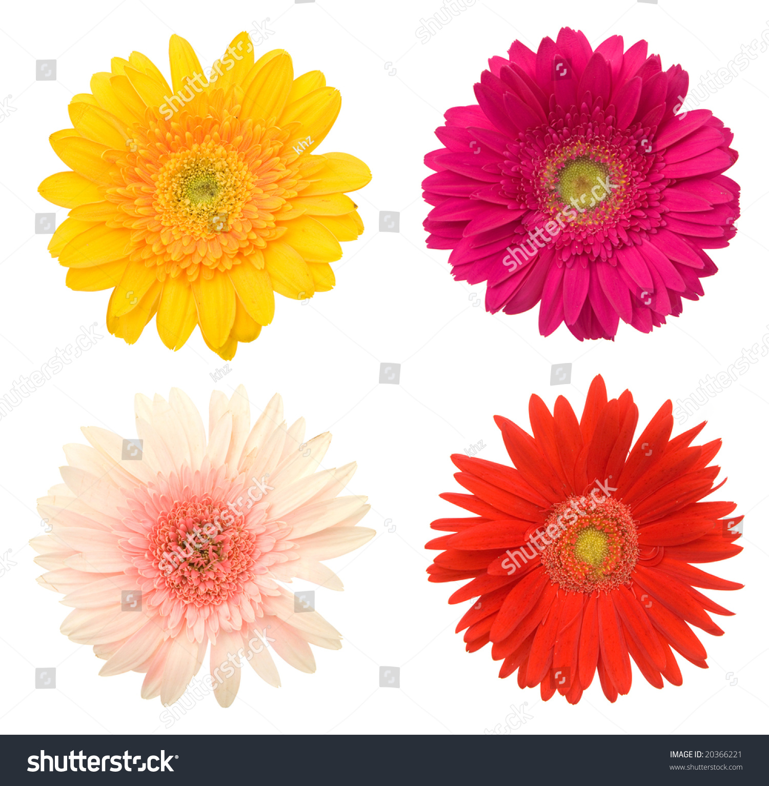 Lots Beautiful Colorful Daisy Flowers On Stock Photo (Royalty Free ...