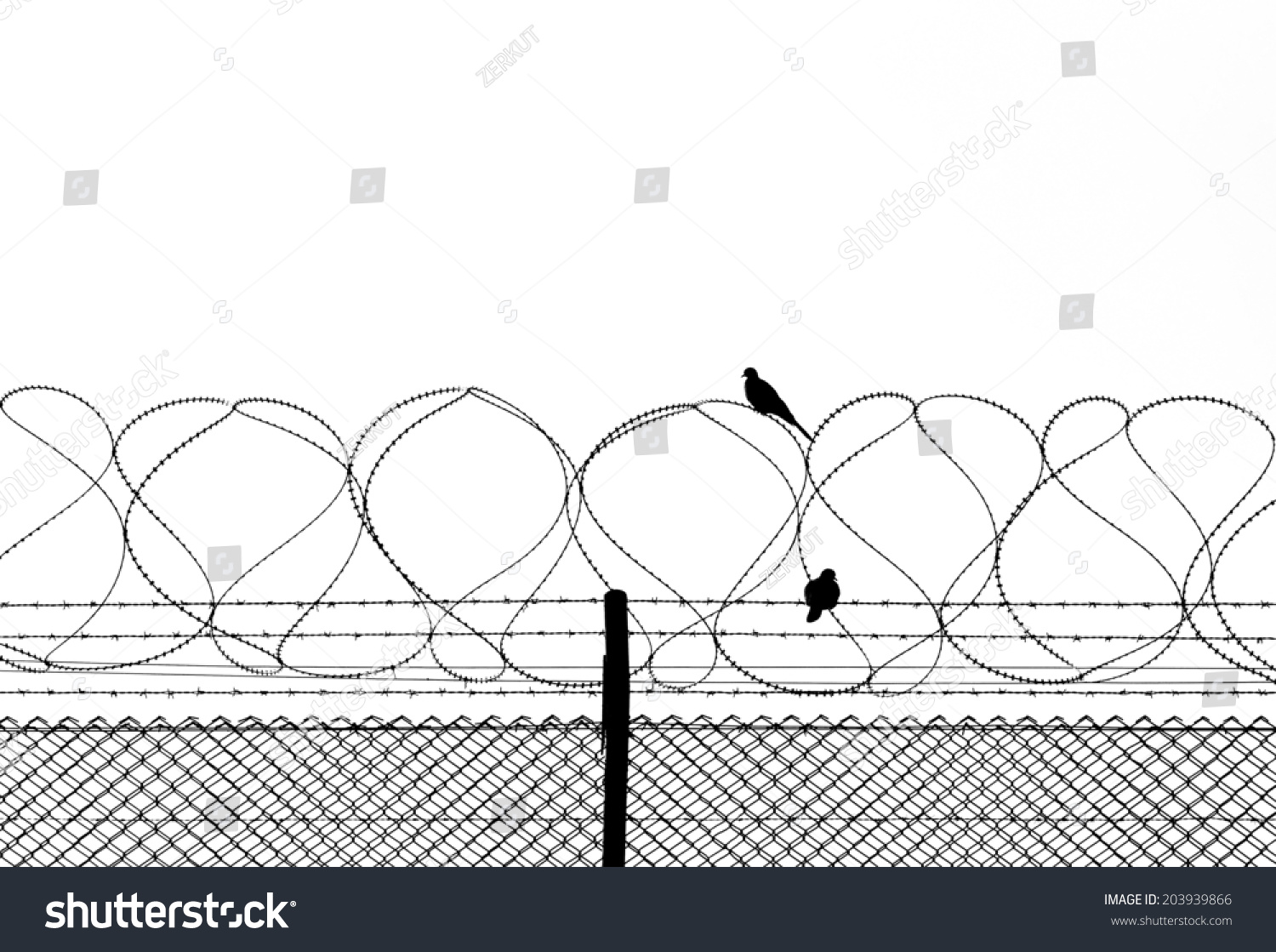 Bird On Barbed Wire Isolated On Stock Photo (Edit Now)- Shutterstock