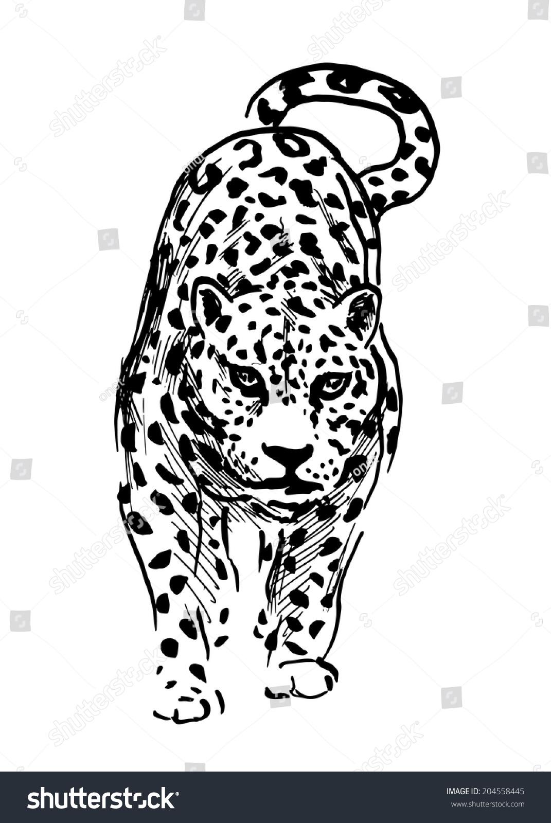 Hand Drawing Jaguar Vector Illustration Vector de stock204558445 ...