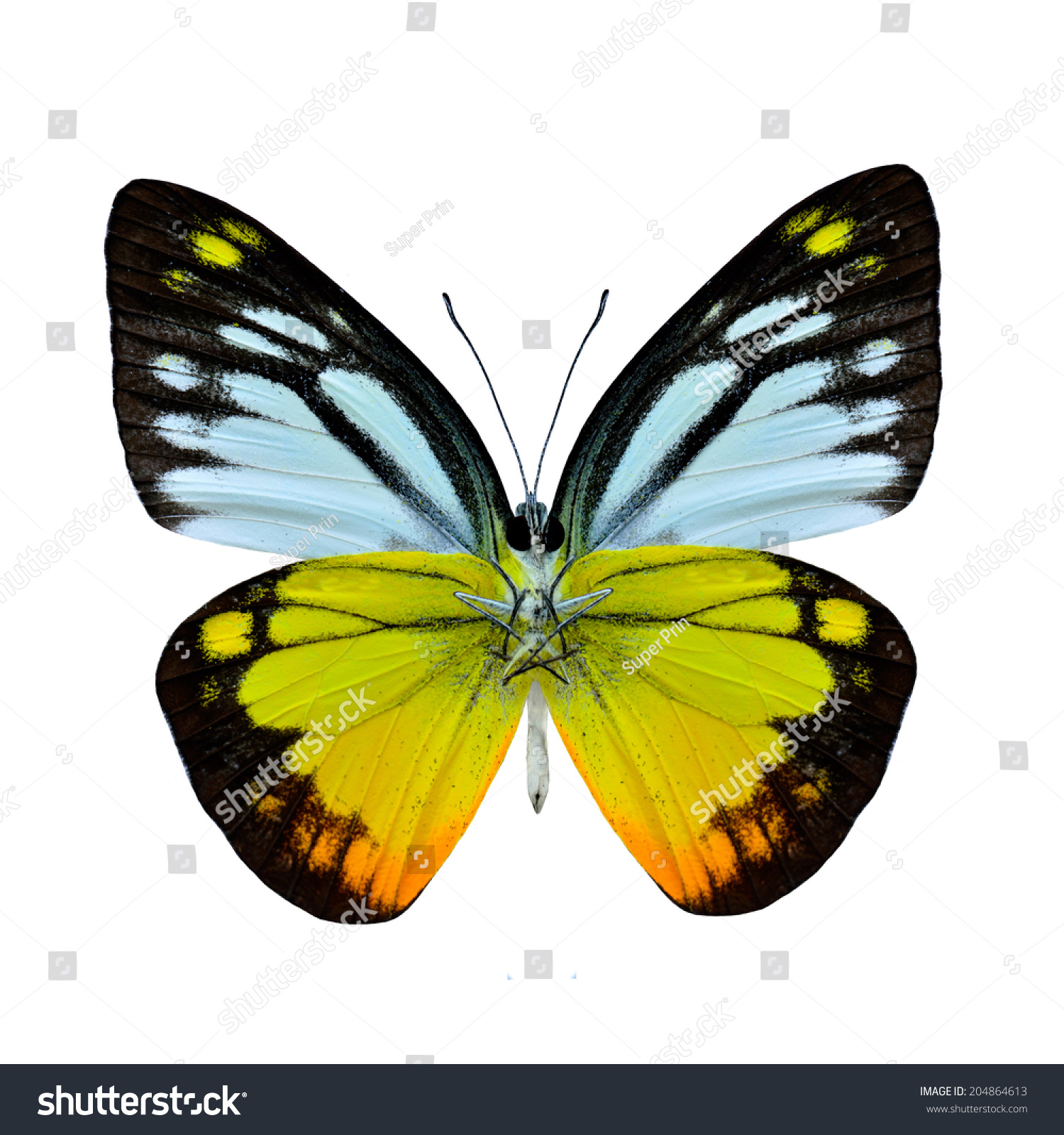 butterfly on yellow color - photo #12