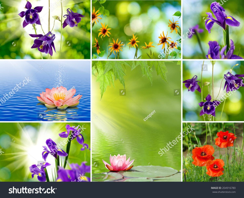 Image mix different beautiful flowers closeup stock photo edit now image of mix different beautiful flowers closeup izmirmasajfo