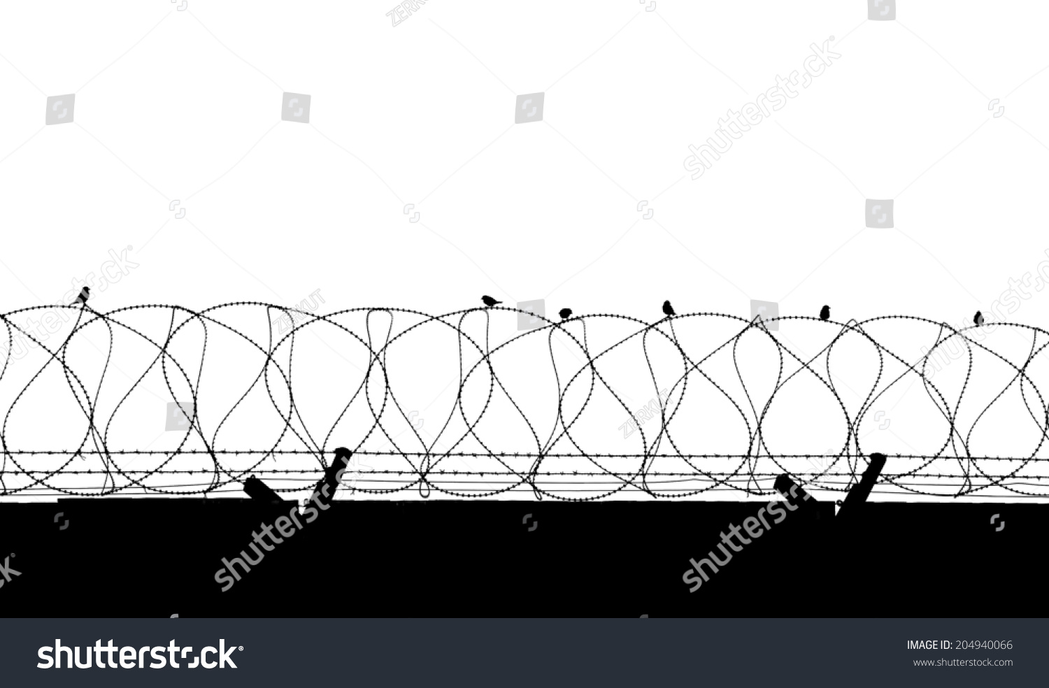 Bird On Barbed Wire Isolated On Stock Photo 204940066 - Shutterstock