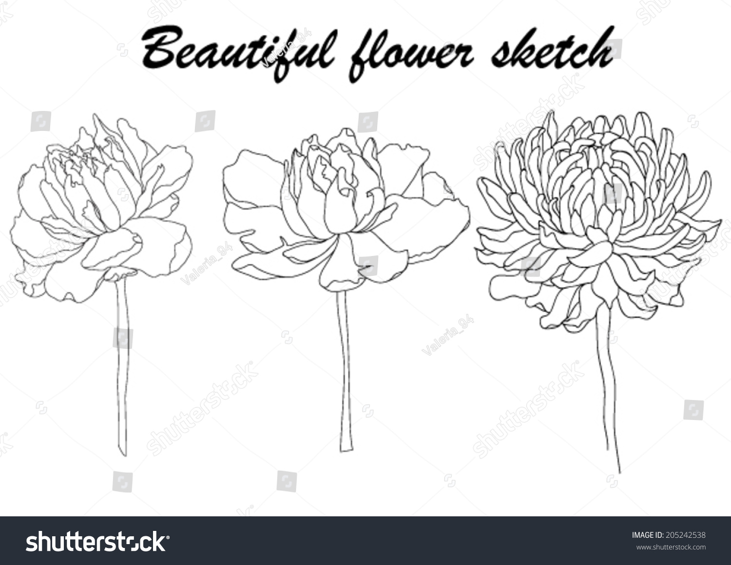 Illustration Sketch Of Chrysanthemum And Peony Flowers In Black And