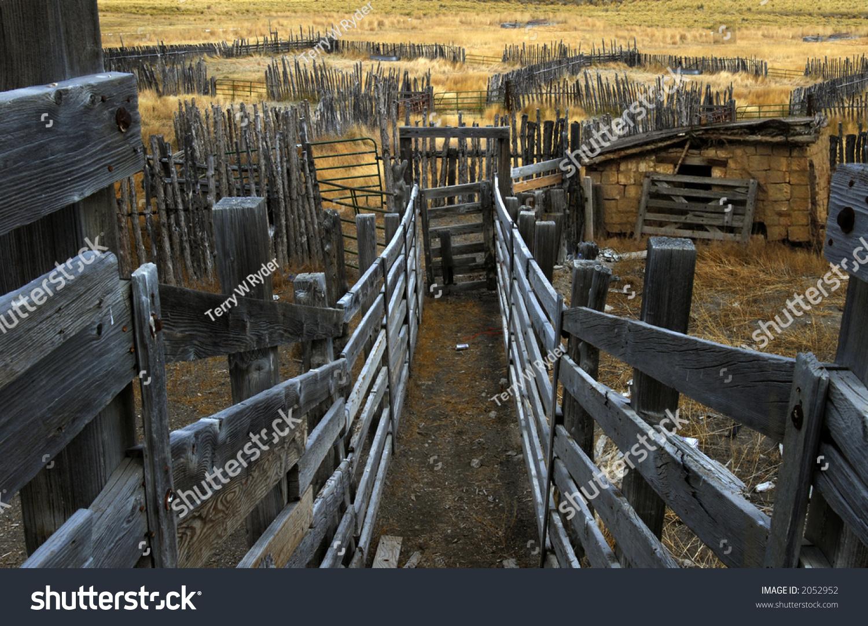 Cattle Chute Corral Seen Loading Platform Stock Photo