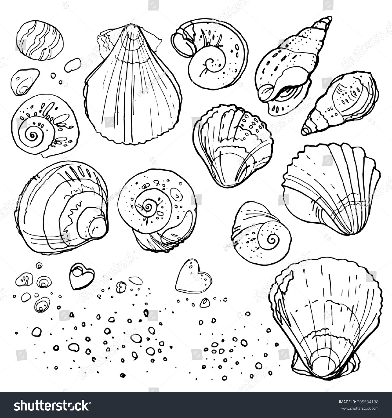Line Drawing Beach : Set seashells on beach vector stock