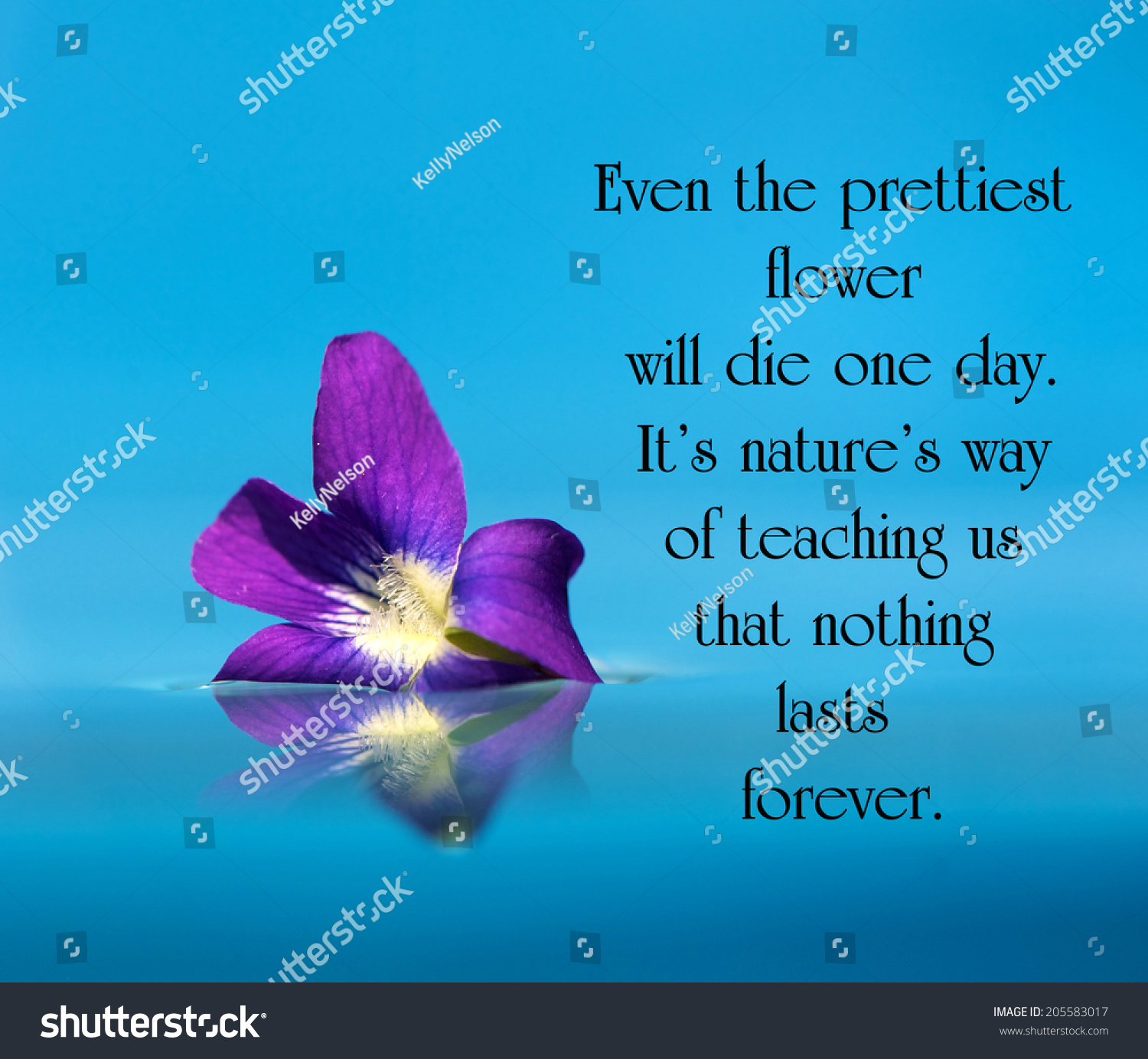 inspirational quote on life by unknown stock photo