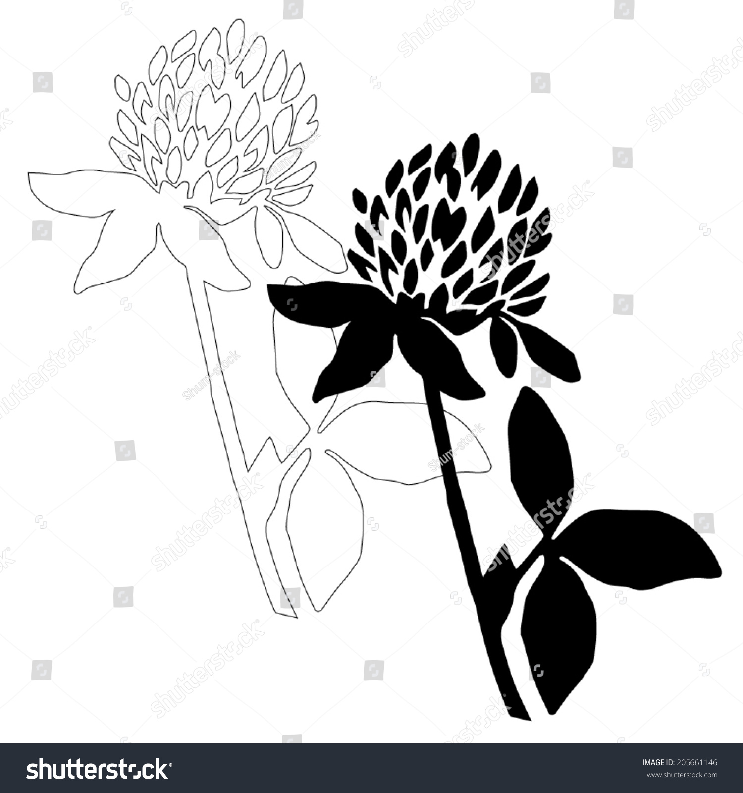 Black clover flower isolated on white background simple botanical illustrations set hand drawn sketch