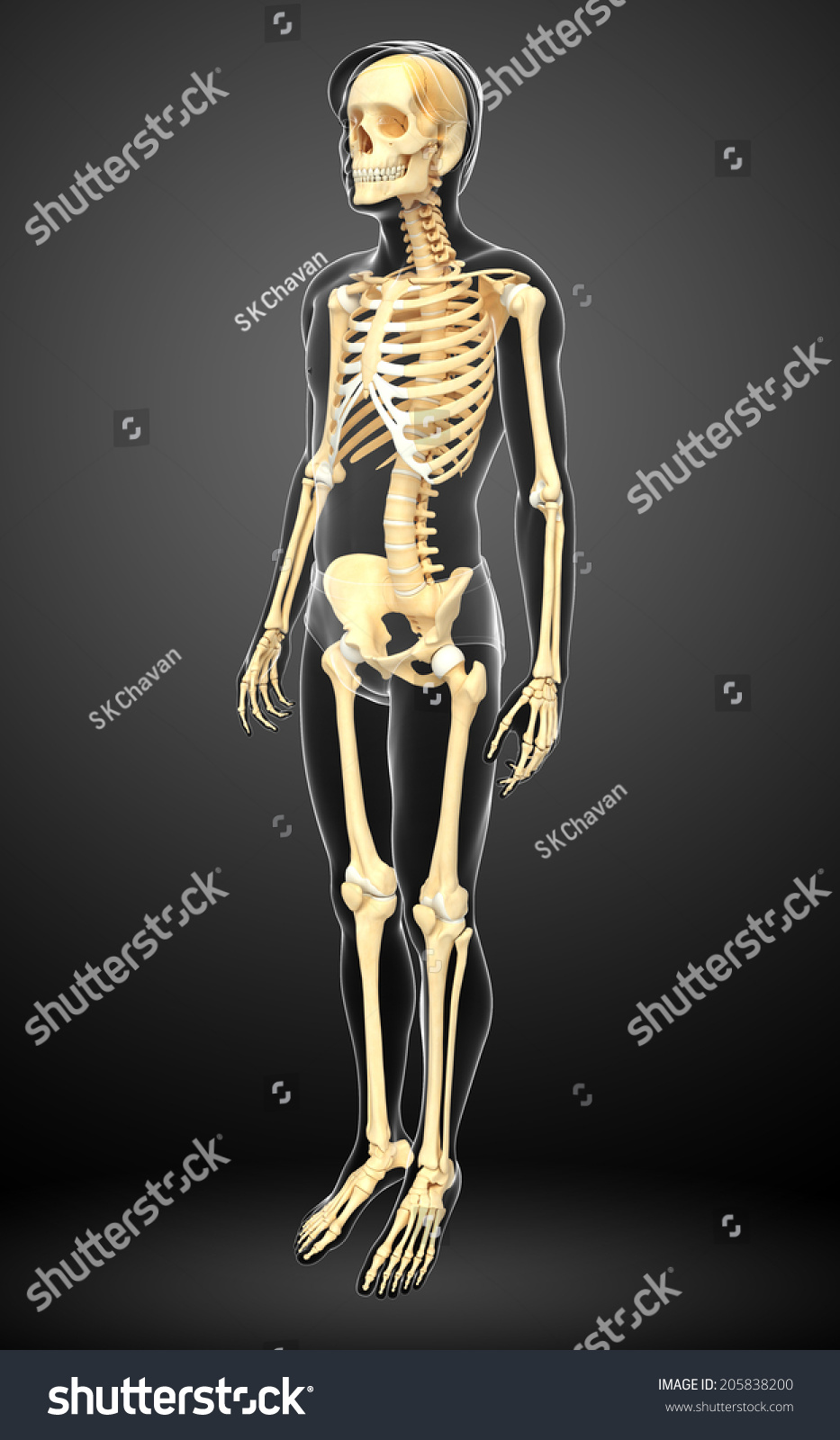 Illustration Human Skeleton Side View Stock Illustration Royalty