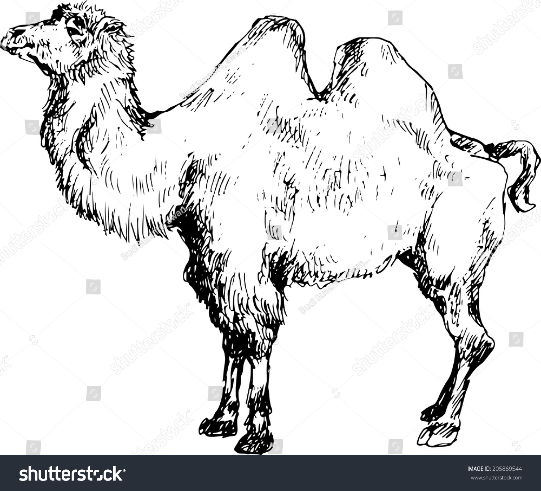 hand drawn camel stock vector 205869544 shutterstock