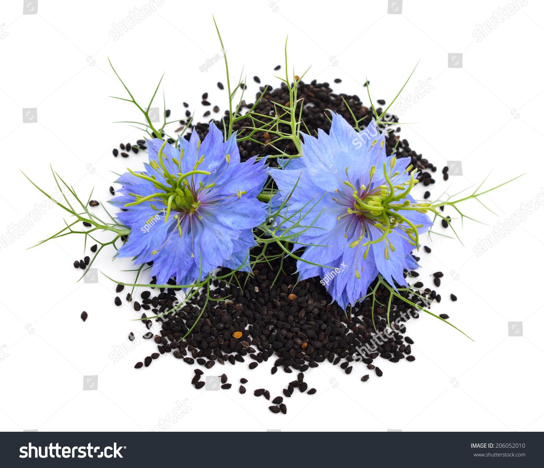 nigella sativa fennel flower nutmeg flower stock photo 206052010 shutterstock. Black Bedroom Furniture Sets. Home Design Ideas