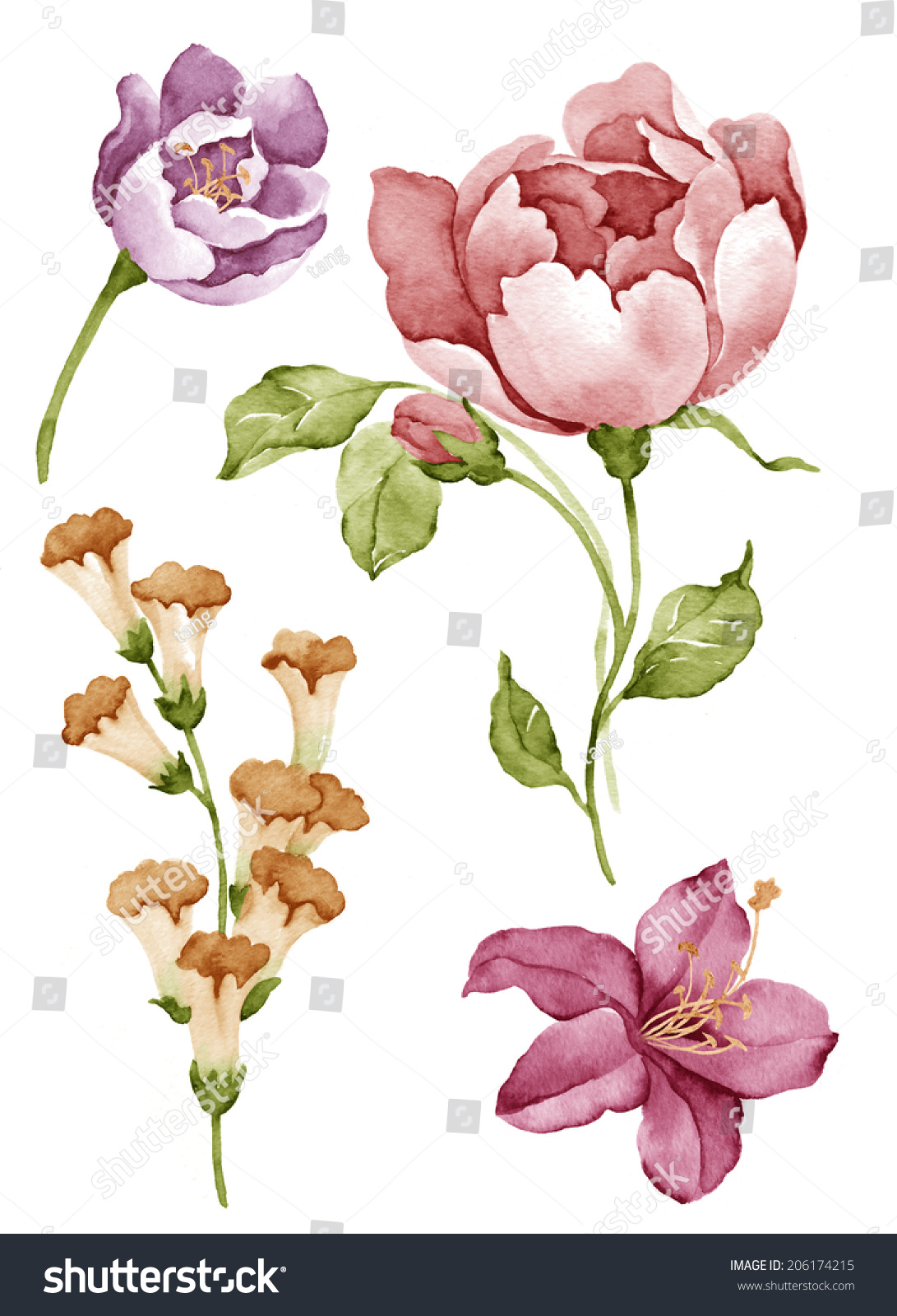Watercolor Illustration Flower Set In Simple White Background Ez