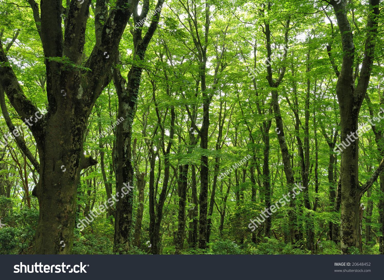 Virgin Forest Fresh Green Stock Photo 20648452 - Shutterstock