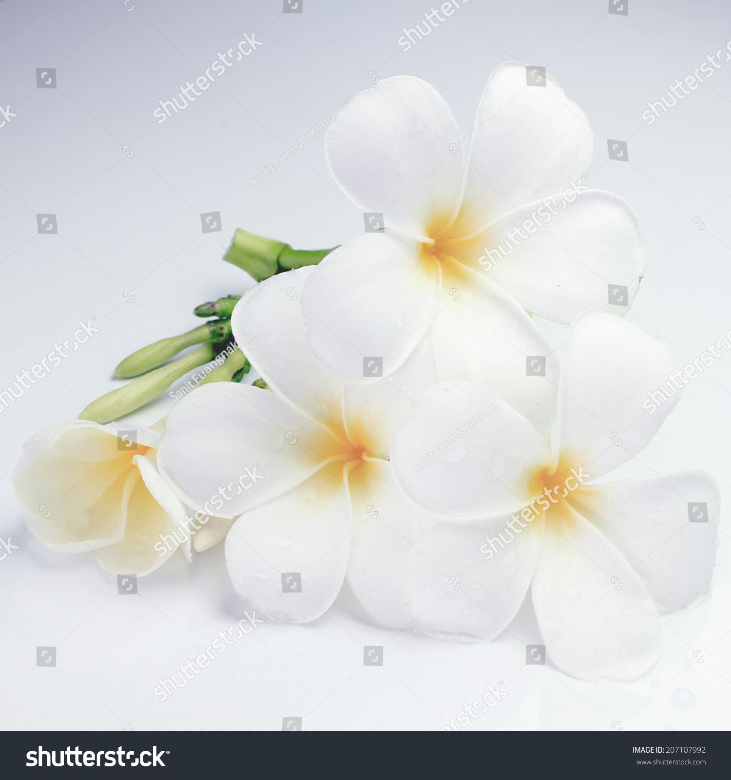 Beautiful Wet White Tropical Flower Petals Stock Photo Edit Now