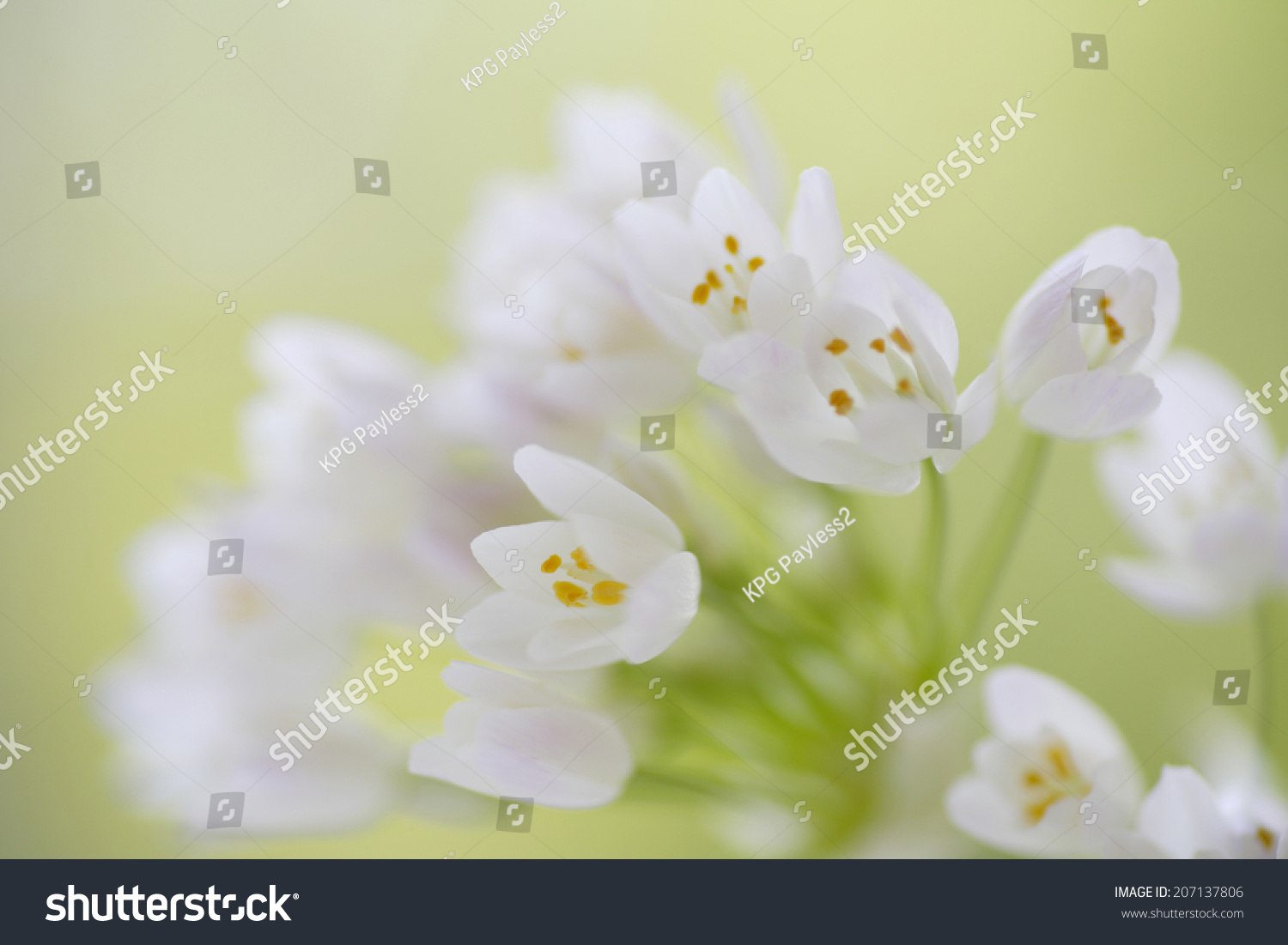Royalty-free Small White Flower Bouquet #207137806 Stock Photo ...