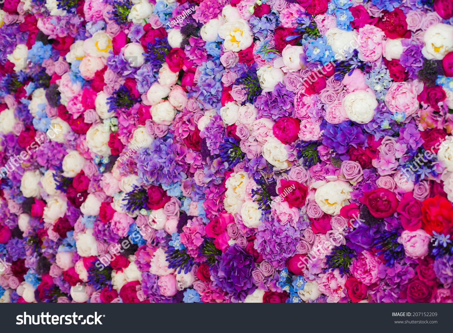 Beautiful Wall Made Of Red Violet Purple Flowers, Roses ...