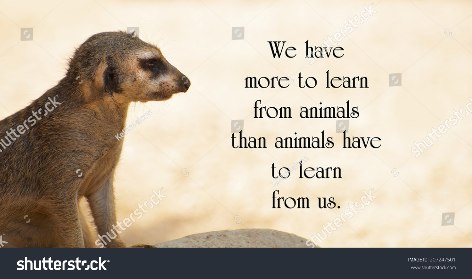 Animals Quotes Inspirational Quote About Animalsanthony Stock Photo 207247501