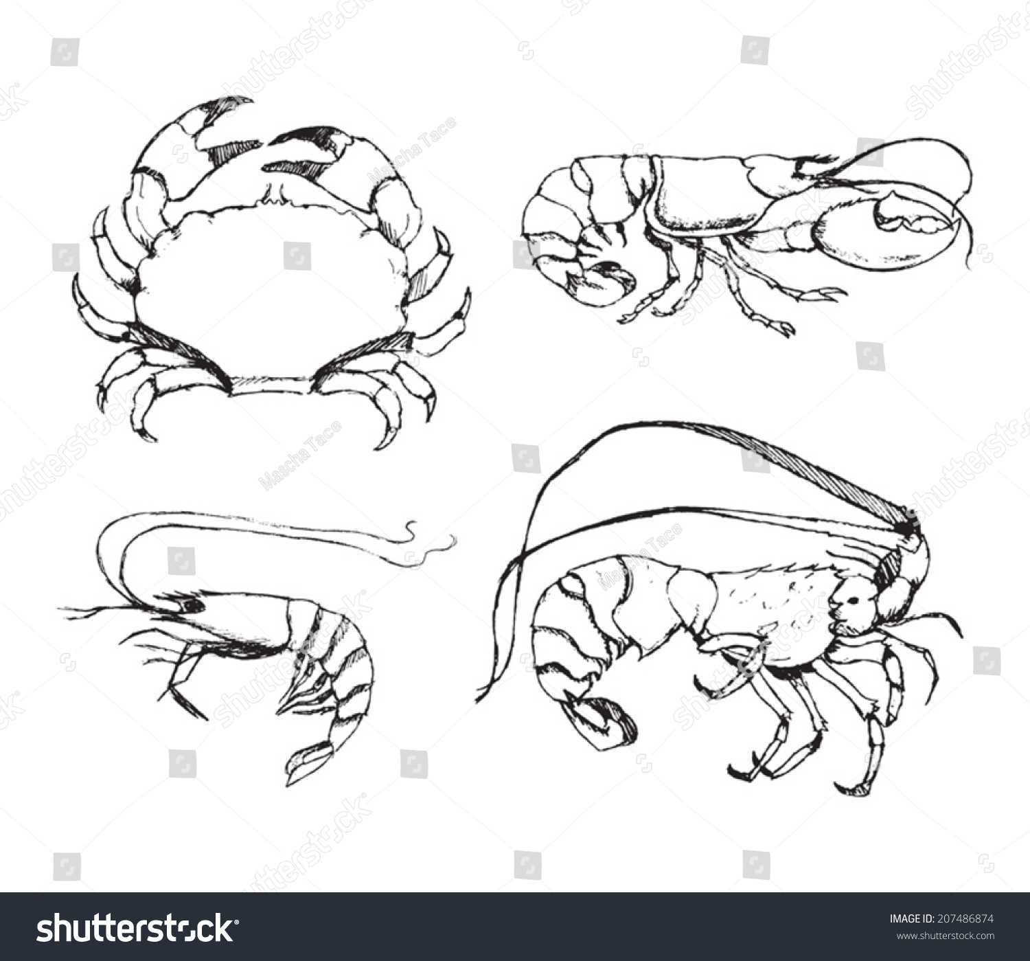 Uncategorized Lobster Drawings vector sketchy drawings shrimp lobster crab stock 207486874 of and spiny on white background