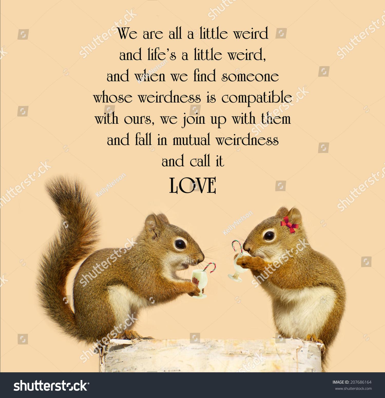 Cute squirrels in love - photo#6