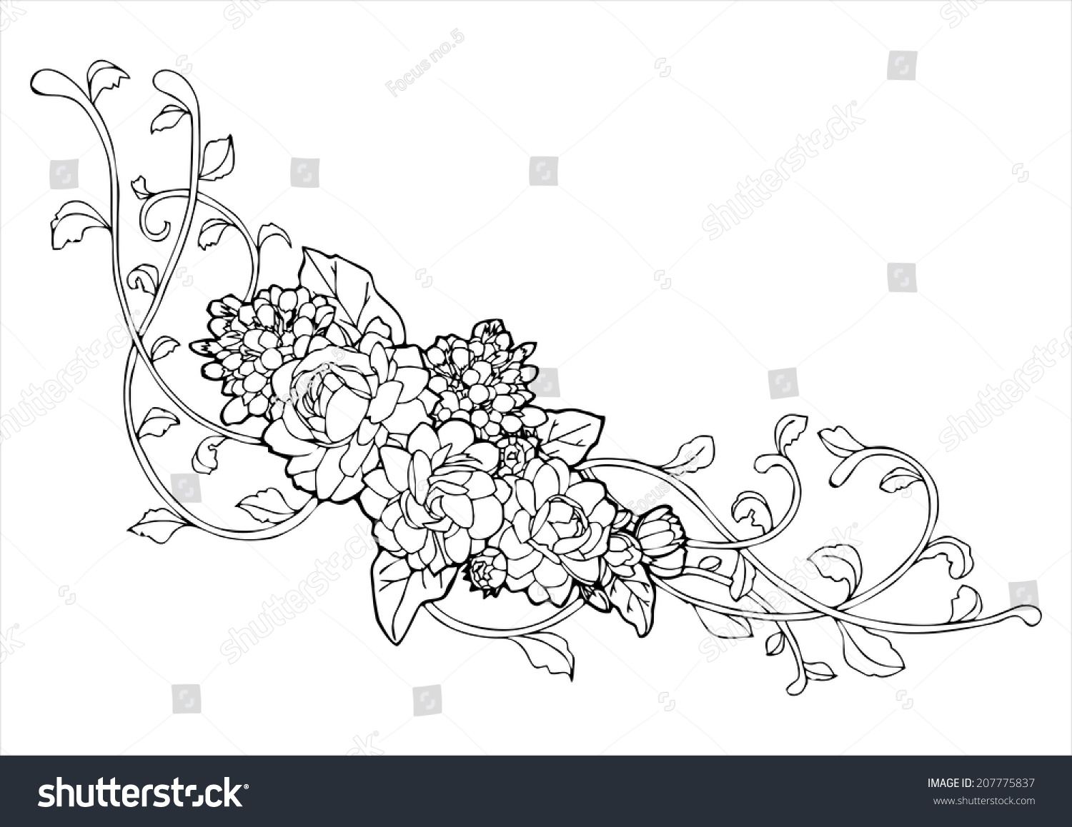 Line Drawing Jasmine Flower : Jasmine flower vine line drawing vector stock