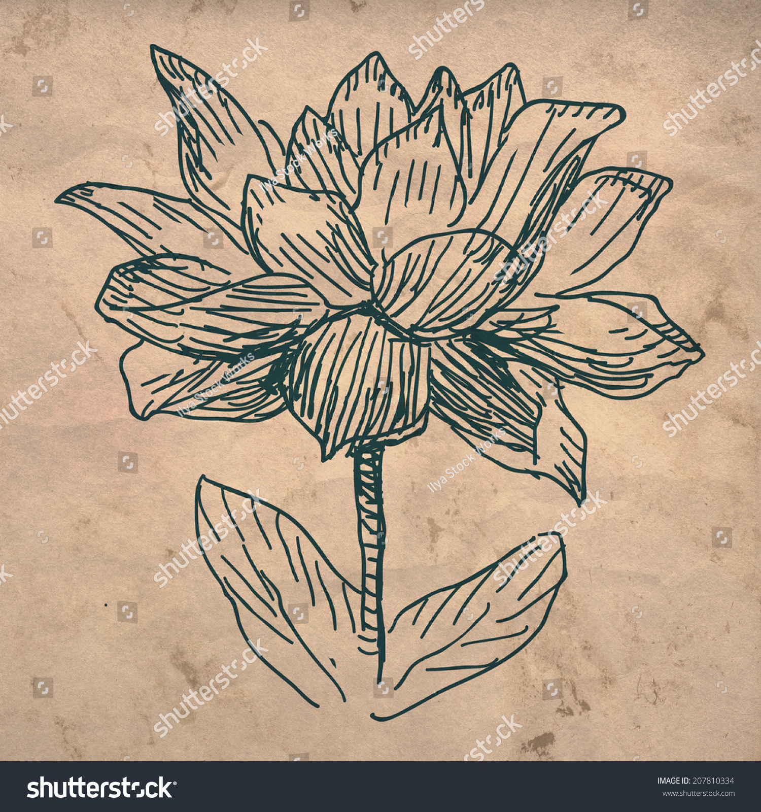 Lotus flower sketch drawing on crumpled stock illustration 207810334 lotus flower sketch drawing on crumpled texture paper izmirmasajfo