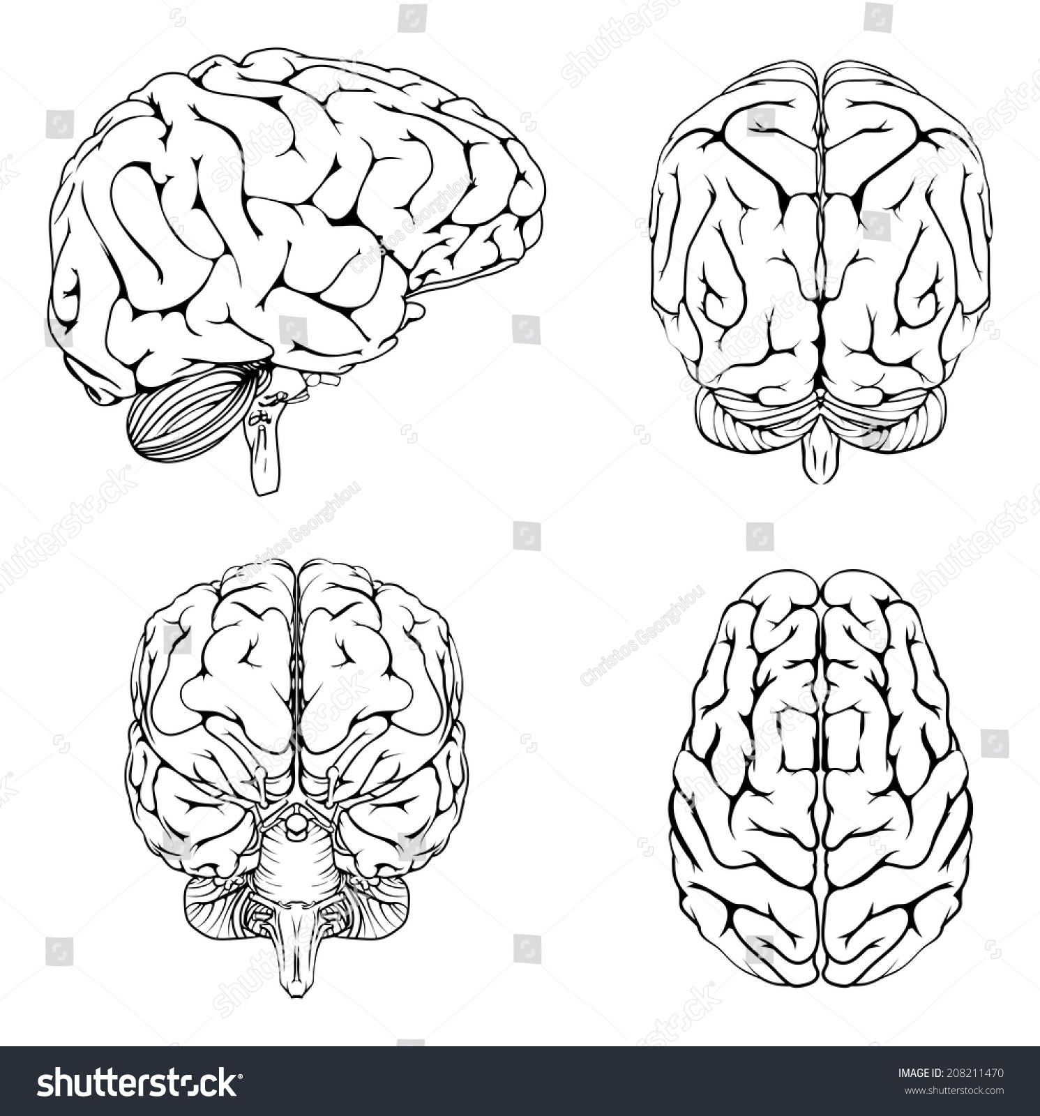 Diagram Brain Top Side Front Back Stock Vector 208211470 ...