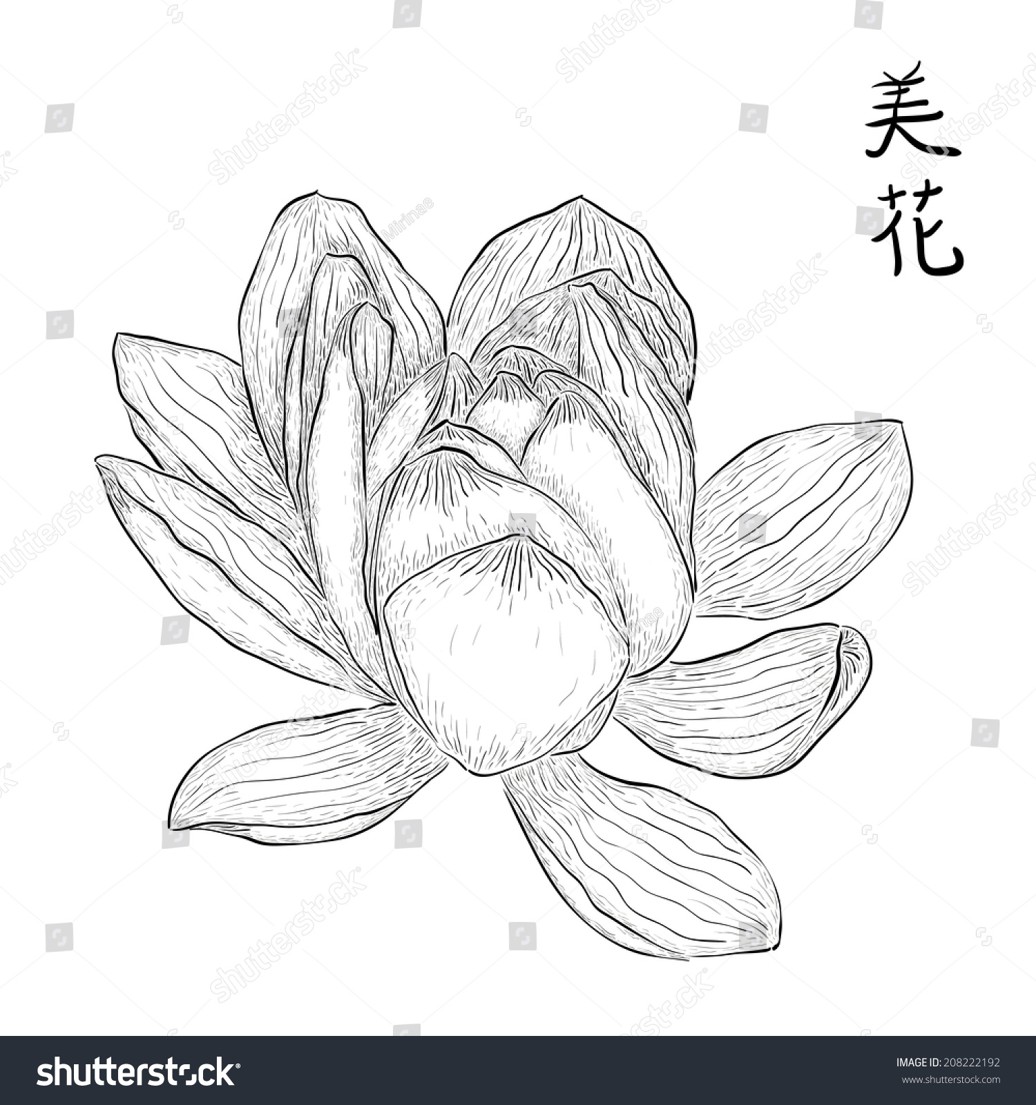 Royalty free hand drawn lotus flower with chinese 208222192 stock hand drawn lotus flower with chinese hieroglyphs meaning beautiful flower black and white izmirmasajfo