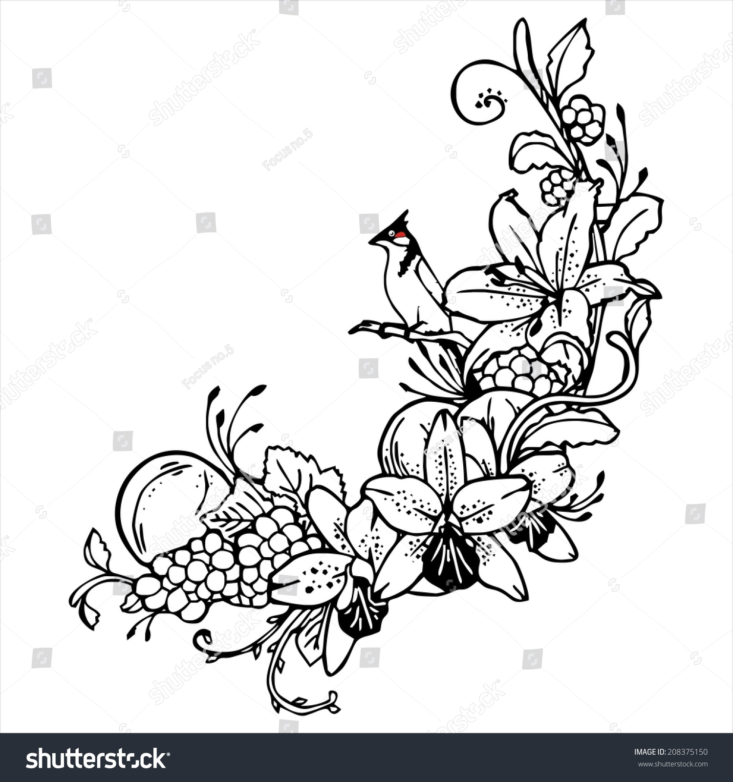 Line Drawing Flower Vector : Bird orange flower line drawing vintage stock vector