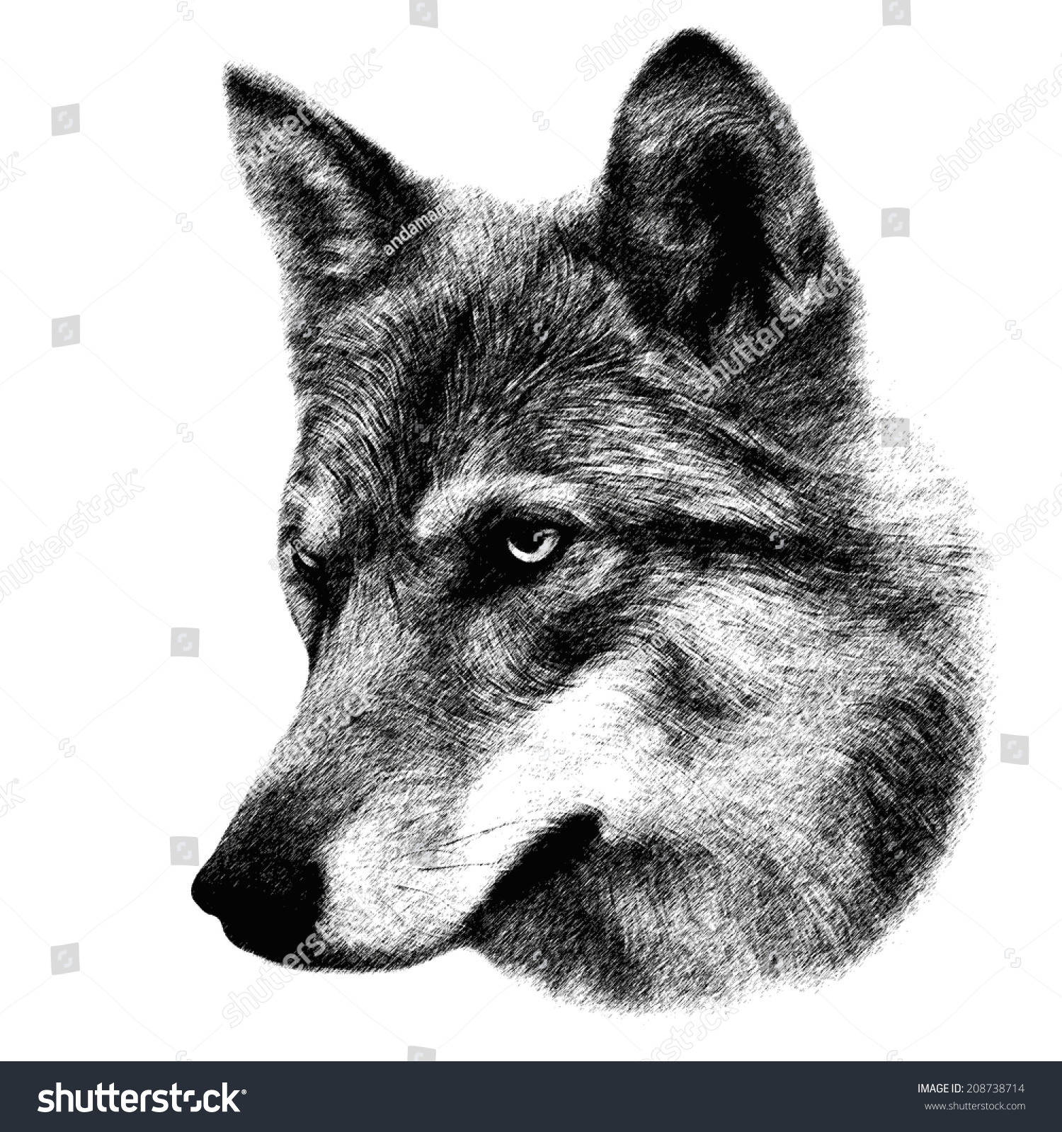 Head Wolf Isolated On White Background Stock Illustration