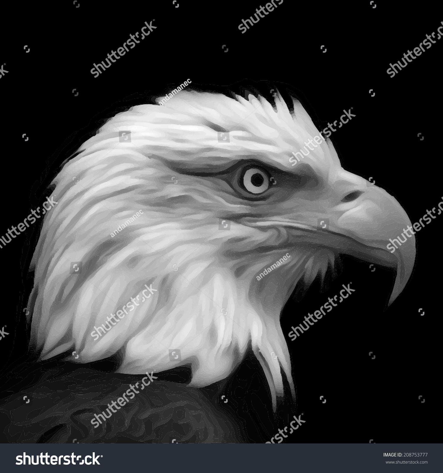 The head of bald eagle haliaeetus leucocephalus isolated on black background side face