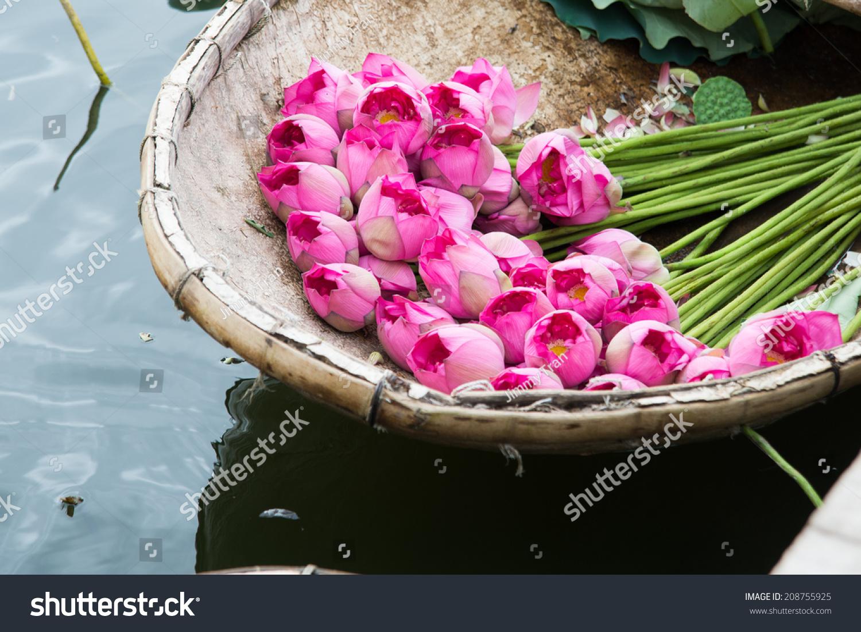 Boat Lotus Flower West Lake Hanoi Stock Photo Edit Now 208755925