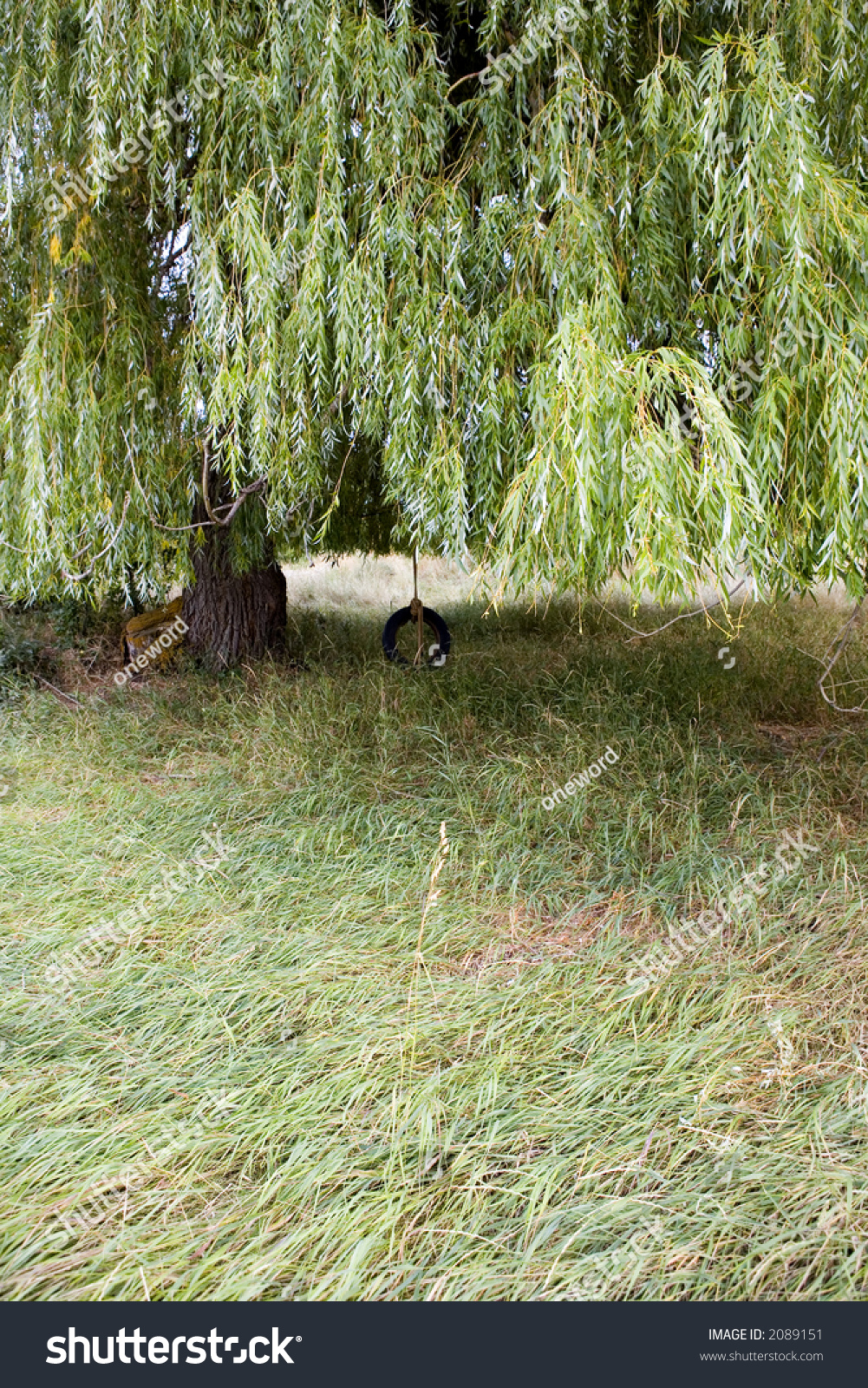 tire swing hanging willow tree backyard stock photo 2089151