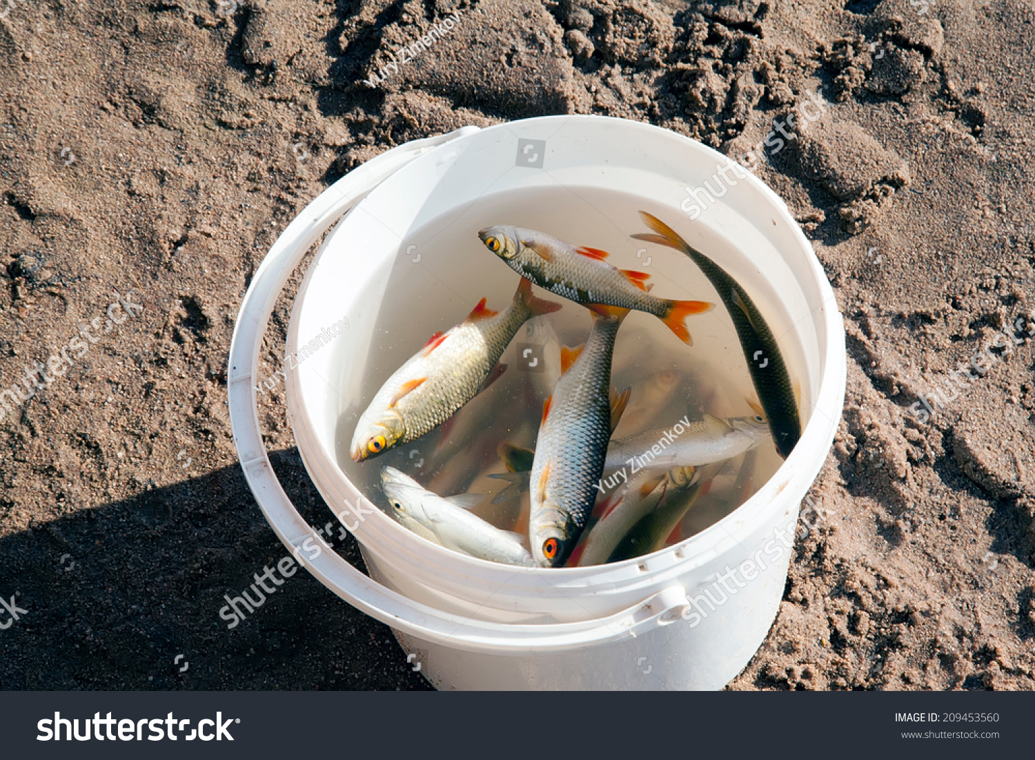 Caught fish is in a white plastic bucket stock photo for Bucket of fish