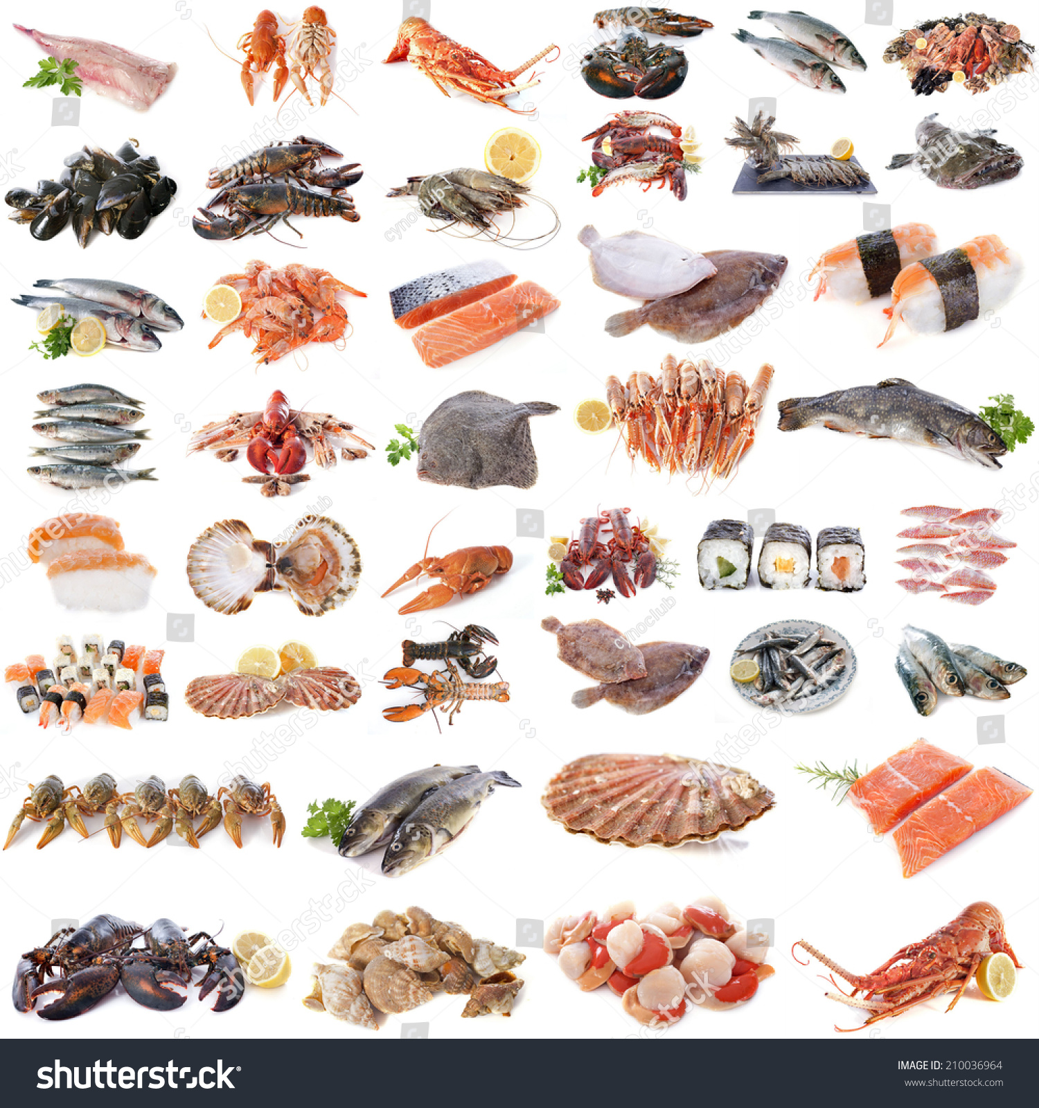 Seafood Fish Shellfish Front White Background Stock Photo ...