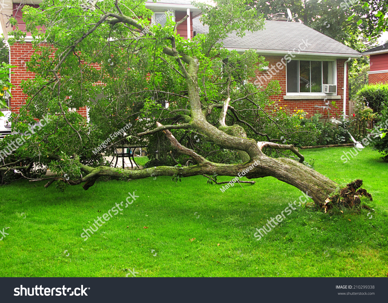 fallen tree due storm hurricane damage stock photo 210299338
