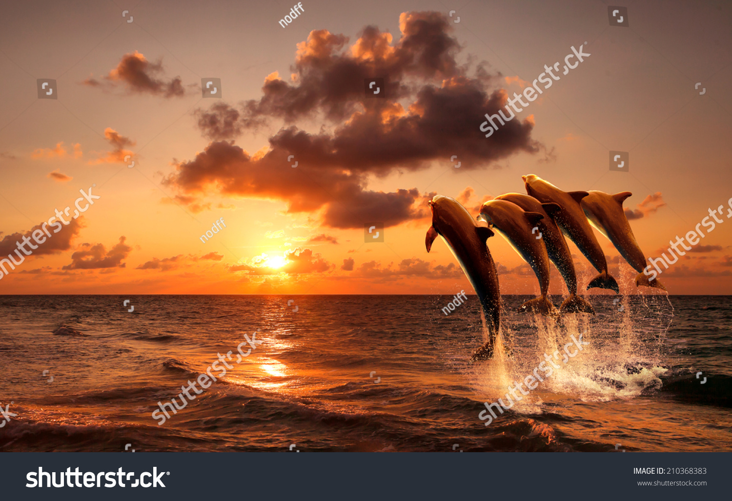 Beautiful Sunset With Dolphins Jumping Stock Photo 210368383 ...