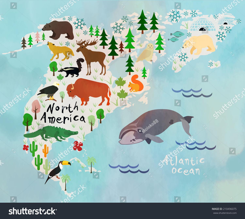 Животные и растения северной америки рисунки 4