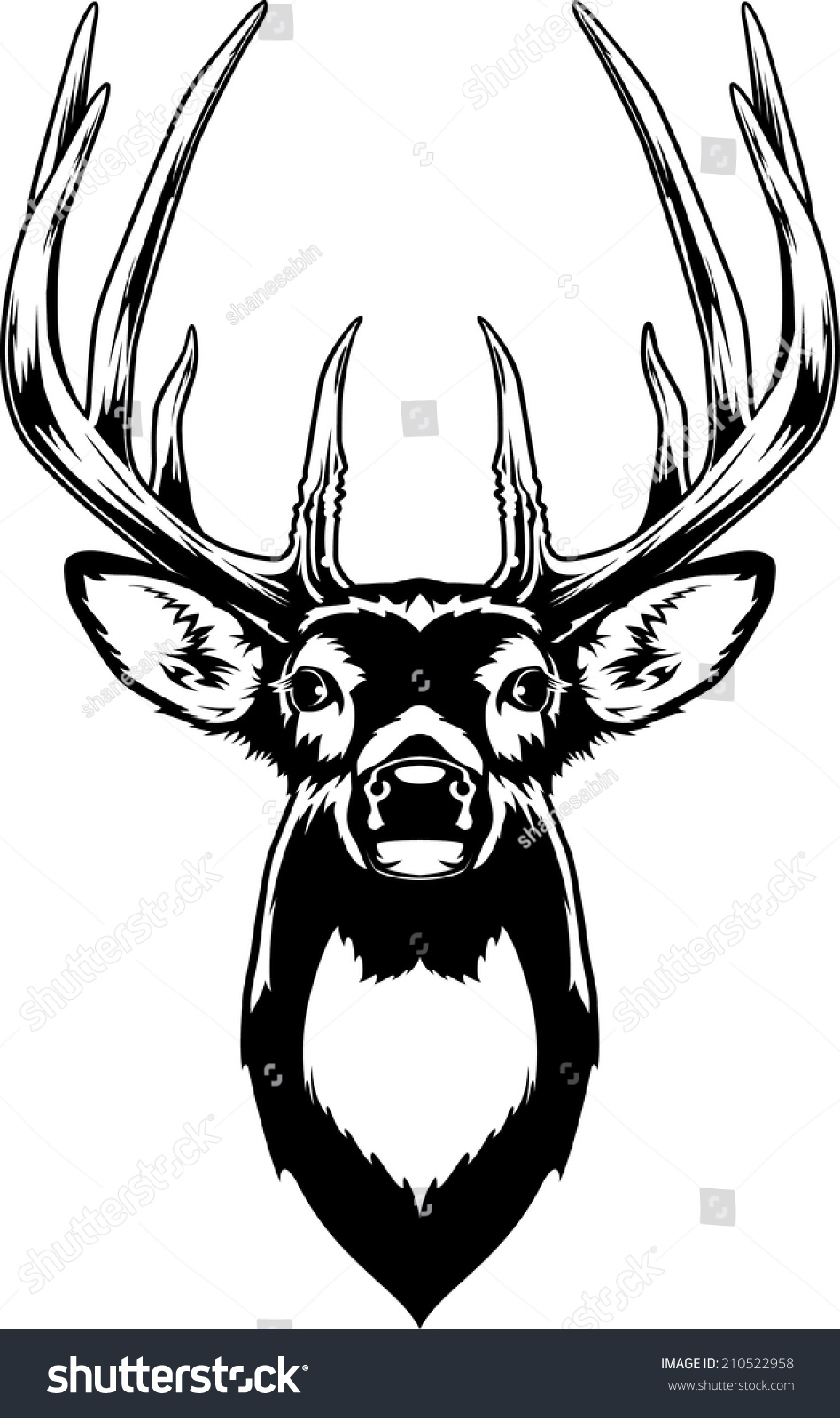 Whitetail Deer Head Vector Illustration