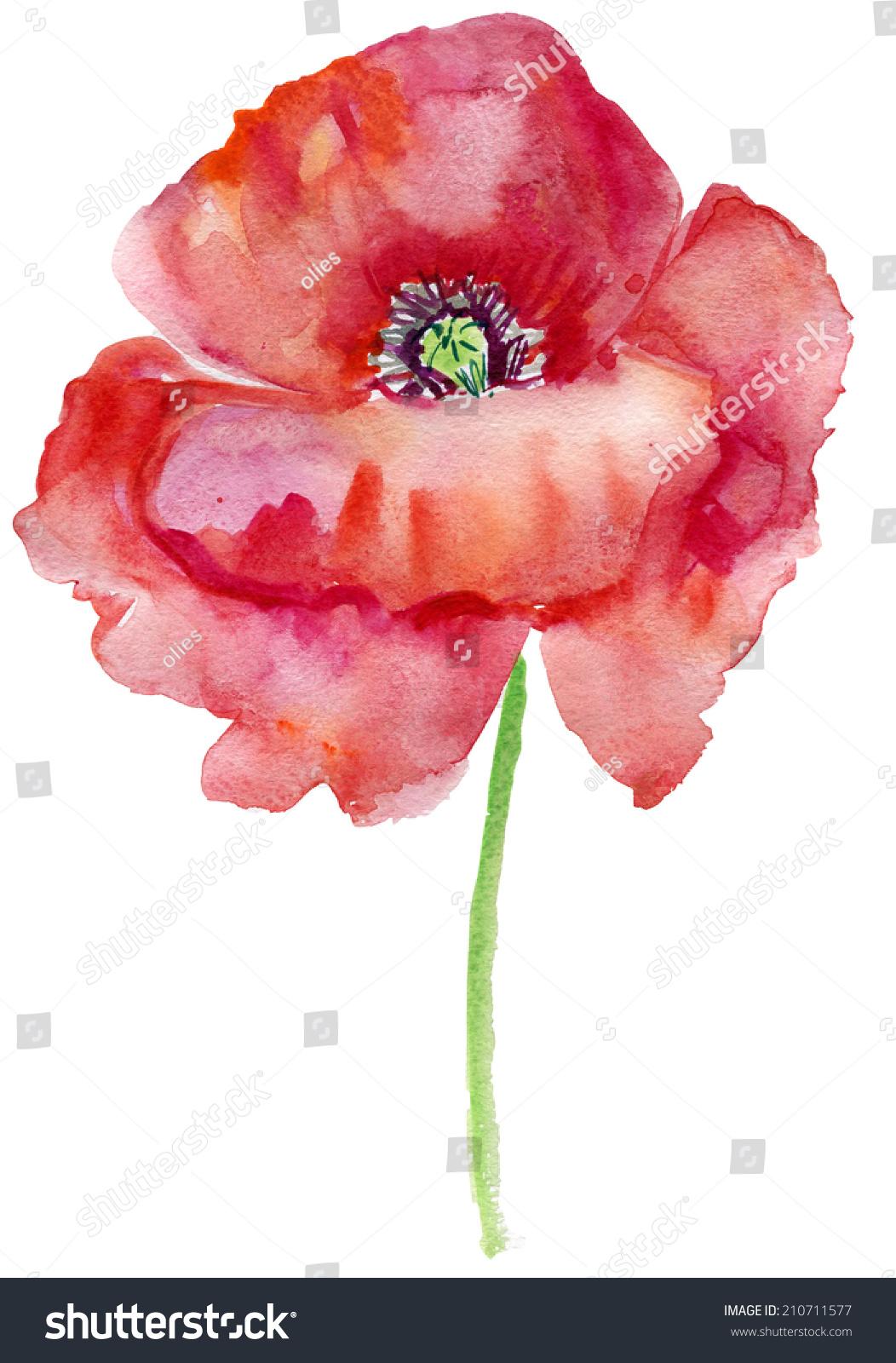 Beautiful Poppy Flowers Watercolor Painting Ez Canvas