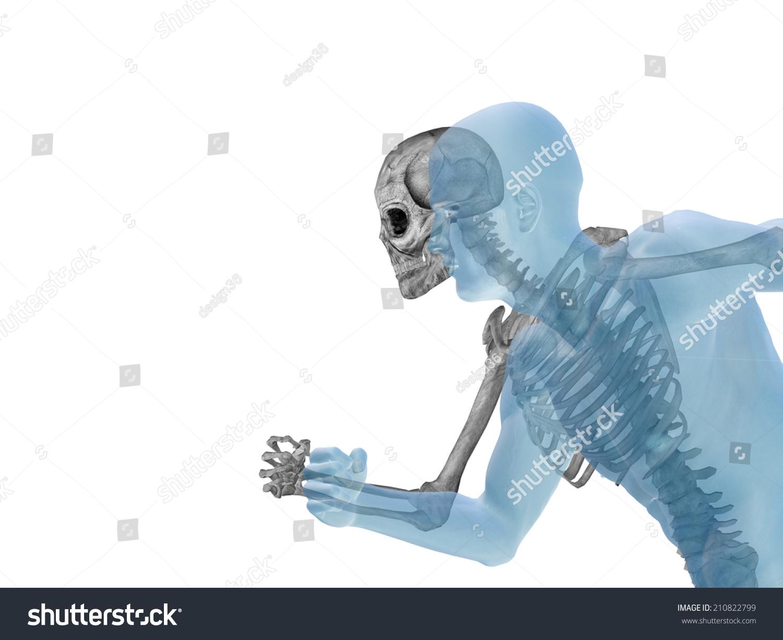 Human Male 3 D Anatomy Bones Skeleton Stock Illustration Royalty