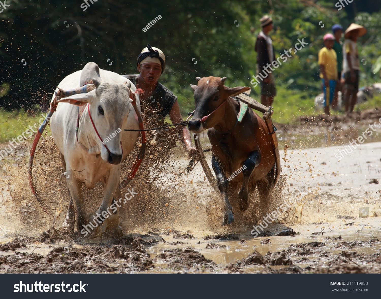 Padangindonesia August 24 Jockey Astride Harness Stock Photo (Edit