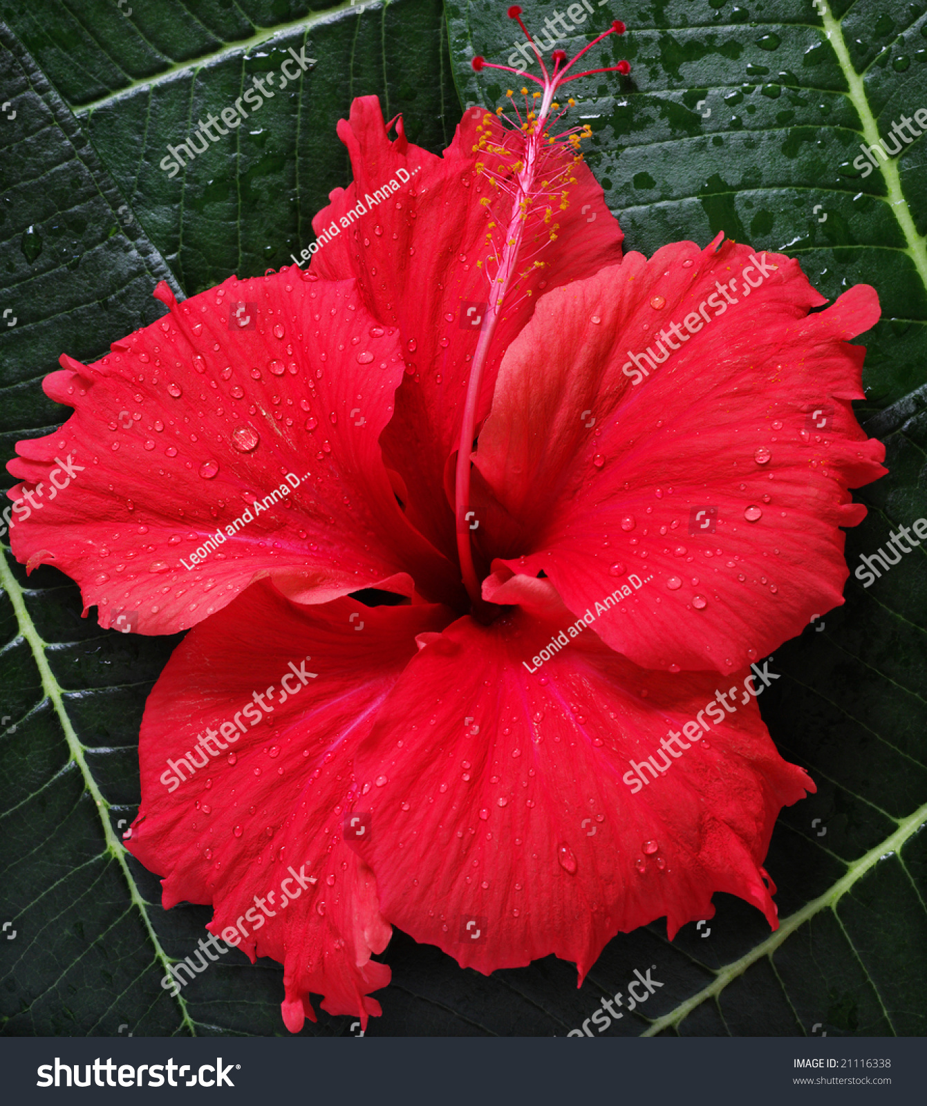 red exotic flowers pictures  pivot media, Beautiful flower