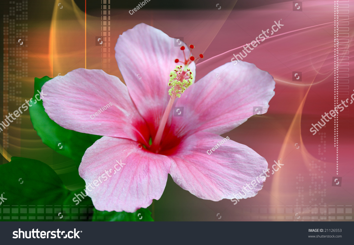 Photograph isolated pink hibiscus flower stock illustration photograph of an isolated pink hibiscus flower pooptronica Image collections