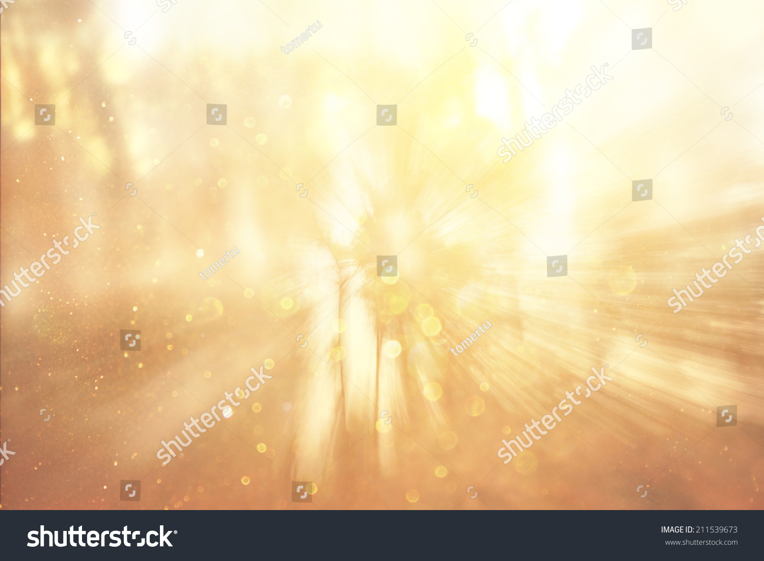 zoom lens and golden light burst among trees #211539673