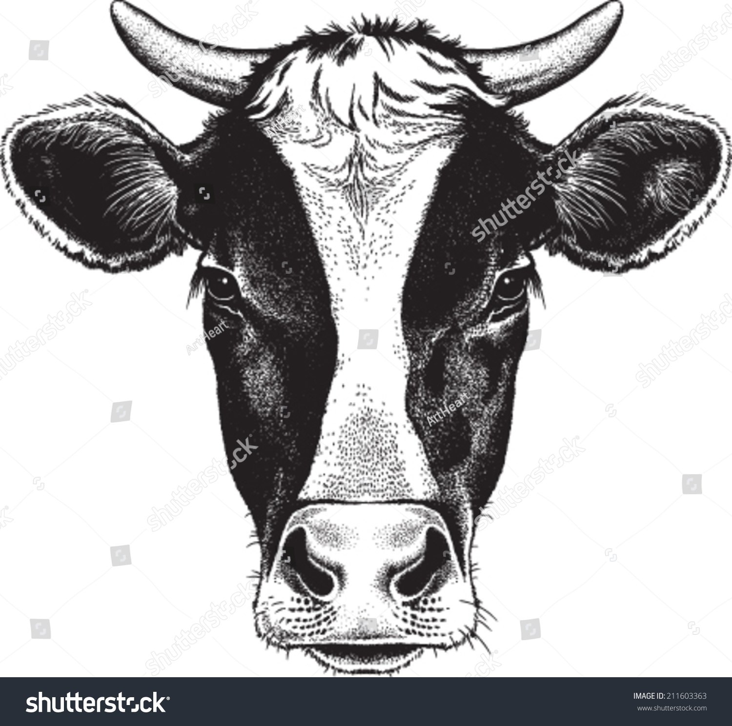 Holstein Cow Head Drawing Wwwgalleryhipcom The Hippest Pics