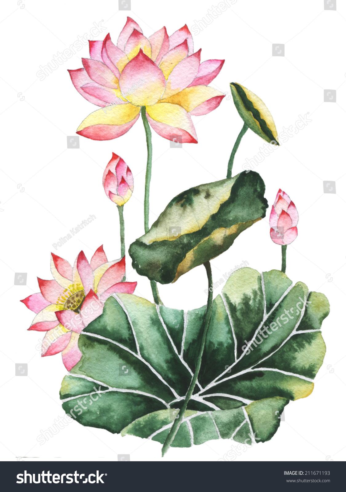 Watercolor Painting Lotus Flowers Oriental Style Stock Illustration