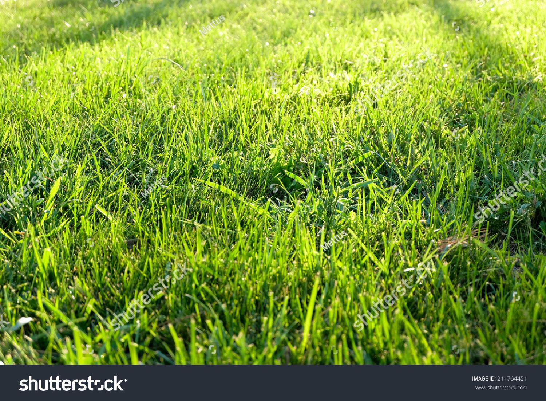 stock-photo-green-grass-background-textu
