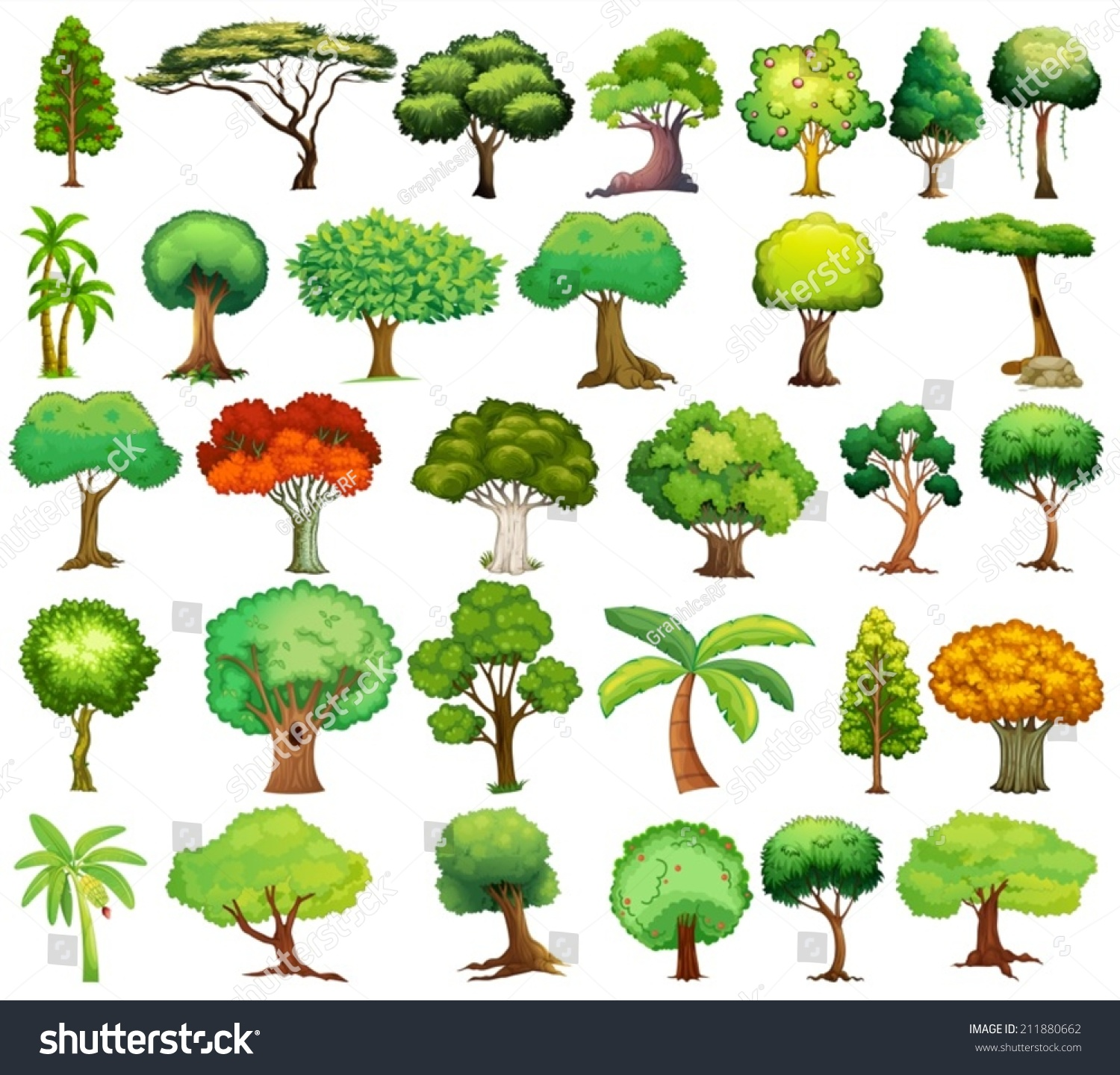 Back gt Gallery For Different Types Of Trees With Names And Pictures