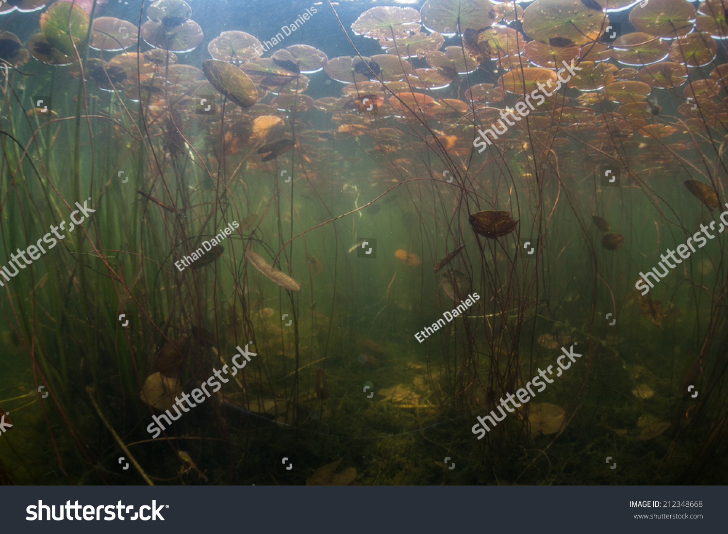 During Summer Months North America Aquatic Stock Photo (Edit
